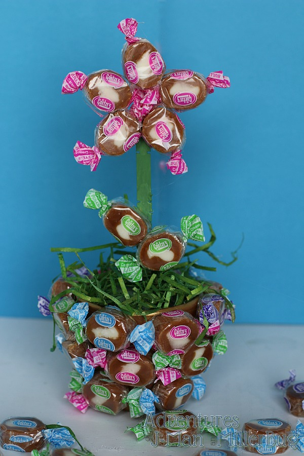 Caramel Creams Flower Pot