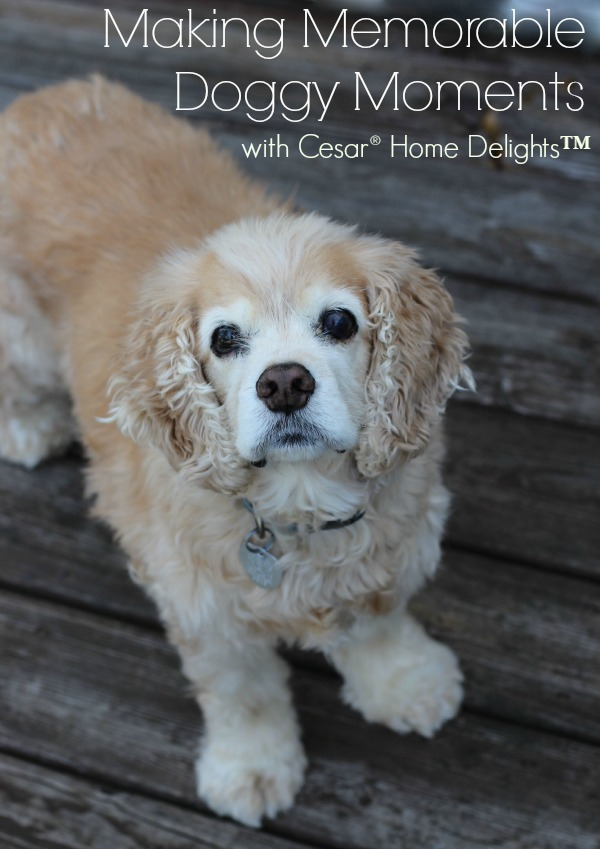 Making Memorable Doggy Moments with Cesar Home Delights