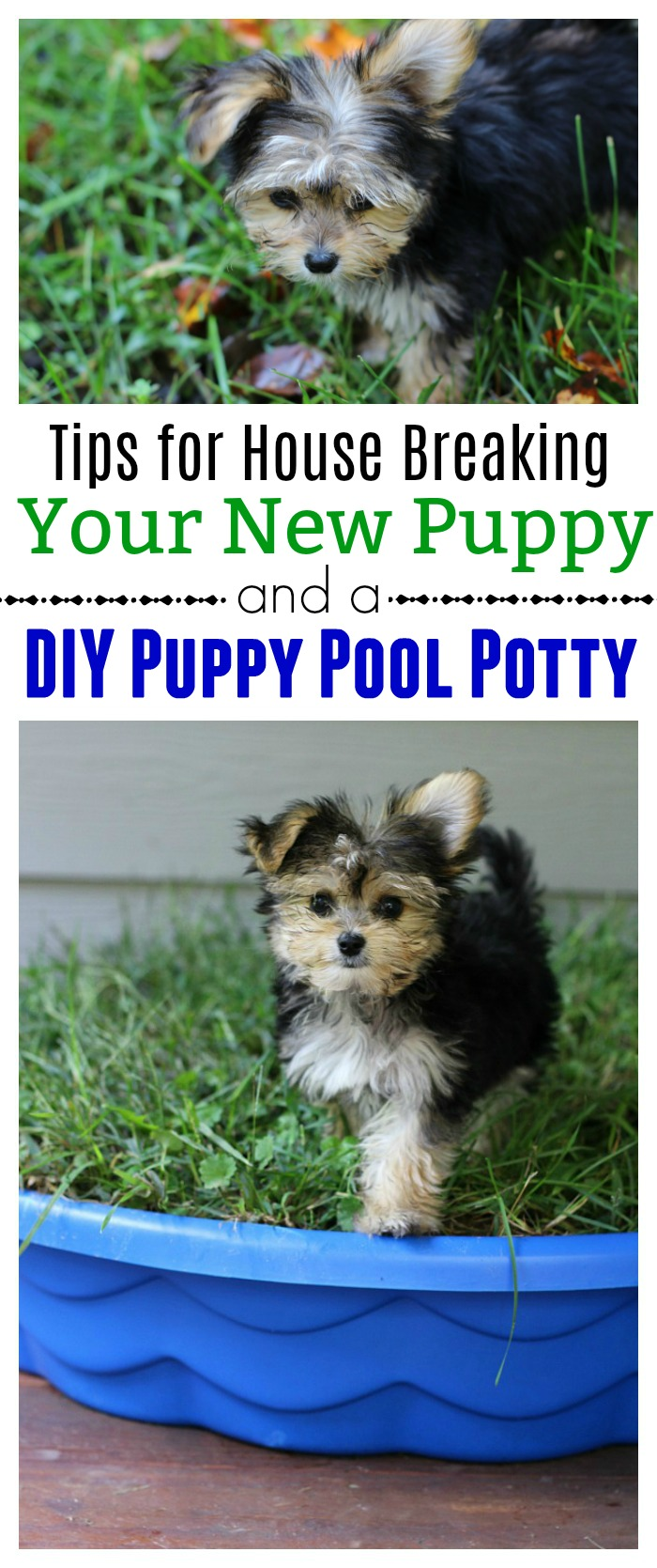 Tips For House Breaking Your New Puppy And A Diy Puppy Pool Potty Mom Unleashed